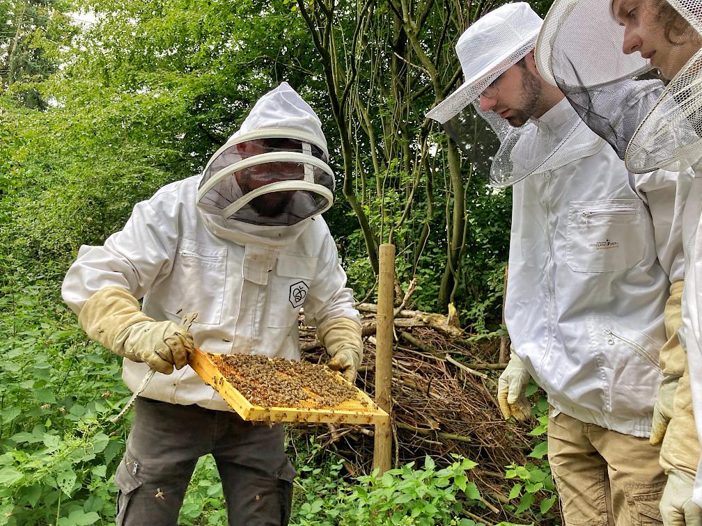 Bienen-Coaching im Juli 2021