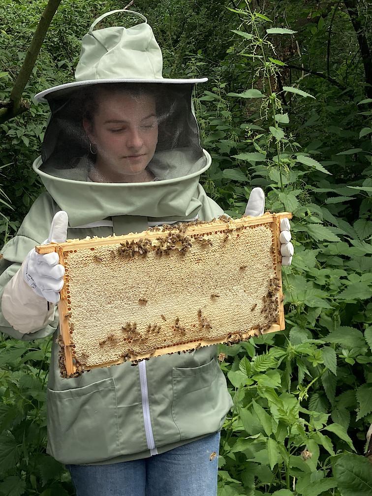 Prall gefüllte Honigwabe