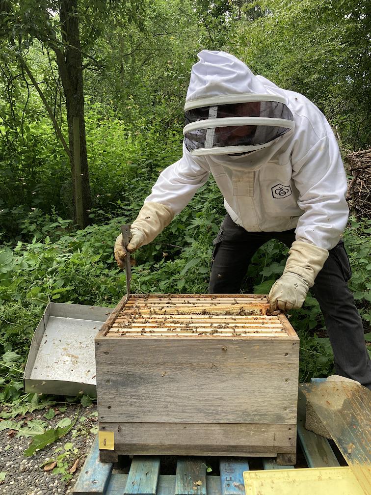 Thorsten an den Bienen