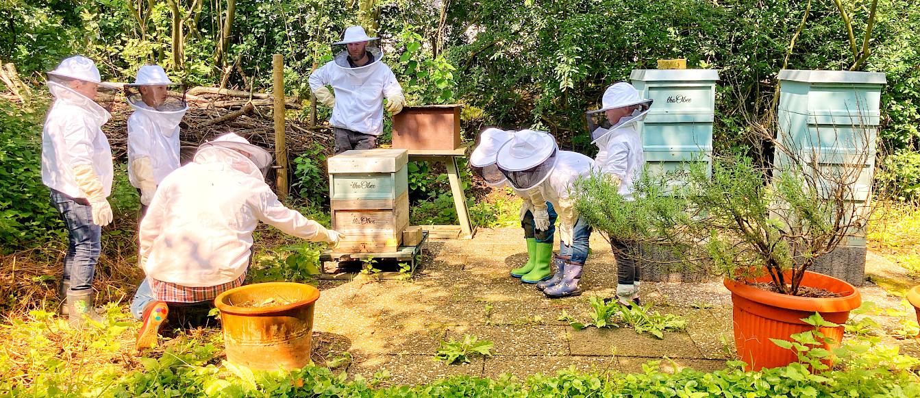 BienenCoaching mit den GrenzlandBienen